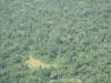 budongo_forest